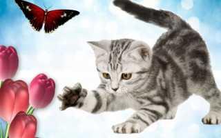 Поздравления с днем кошек прикольные