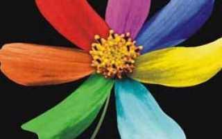 8 марта цветик семицветик