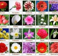 Цветы женщине другу