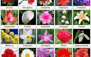 Какого цвета цветы дарить женщине