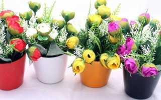 Дарят ли цветы в горшках