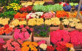 Не дарите девушкам цветы