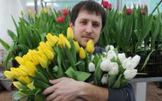 Какие цветы дарят мужчинам фото