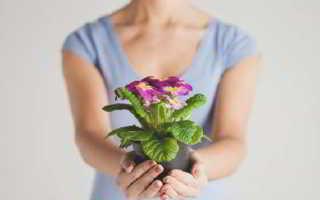 Можно ли дарить цветы в горшочке