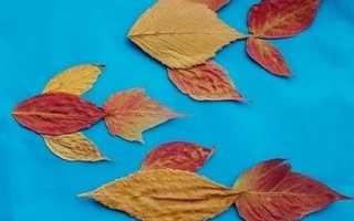 Детские аппликации из листьев для первого класса