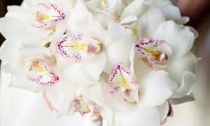 Самые красивые цветы для любимой женщины