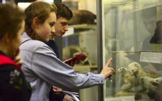 Квест для младших школьников в музее