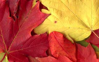 Фигуры из листьев деревьев фото