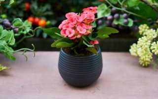 Можно ли дарить живые цветы