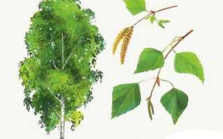 Картинки осенних листьев для детей детского сада