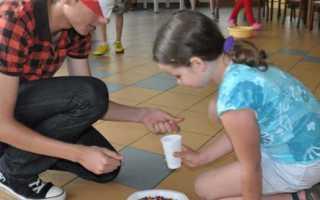 Как провести викторину для детей