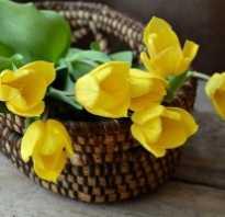 Какие цветы можно дарить женщине